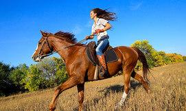 רכיבת סוסים מול נופי הכרמל