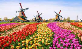 אביב בכפר נופש בהולנד + שבועות