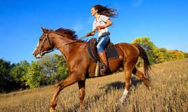 טיולי רכיבה על סוסים