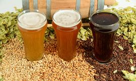 סדנה להכנת בירה ביתית