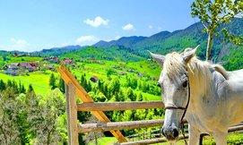 חופשת קיץ משפחתית בהרי הקרפטים