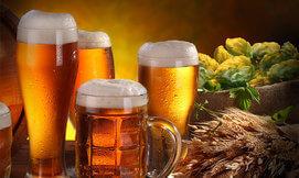 סדנת בישול בירה