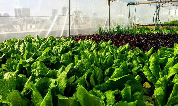 סדנת חקלאות עירונית