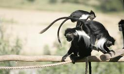 פארק הקופים, פעילות לכל המשפחה