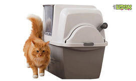 שירותים אוטמטיים לחתול