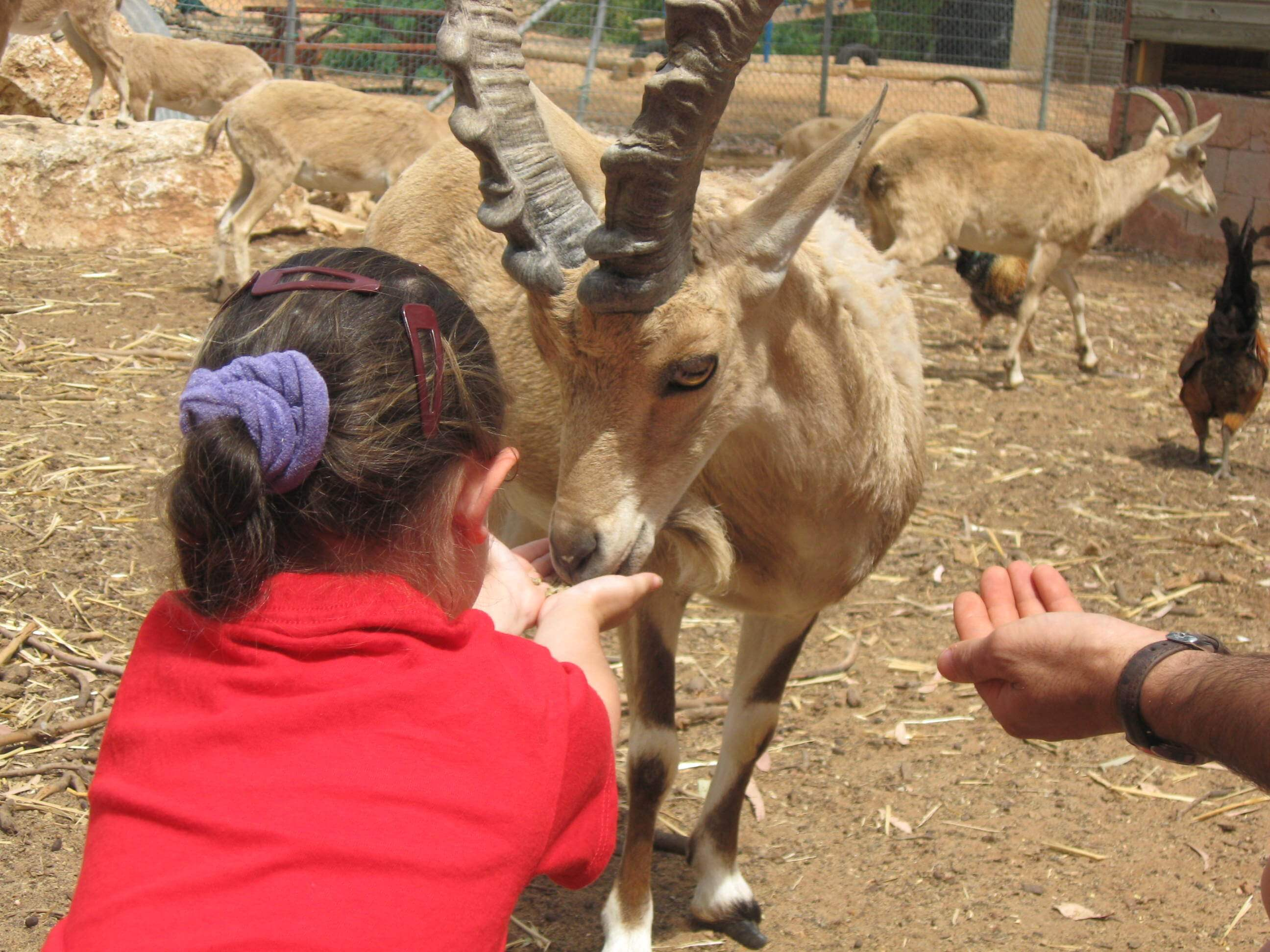 לגעת בטבע - חוויה לכל המשפחה בכפר הירוק