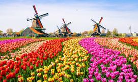 קיץ משפחתי בהולנד