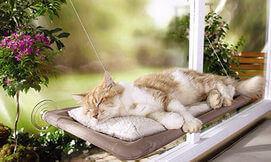 מיטת חתול