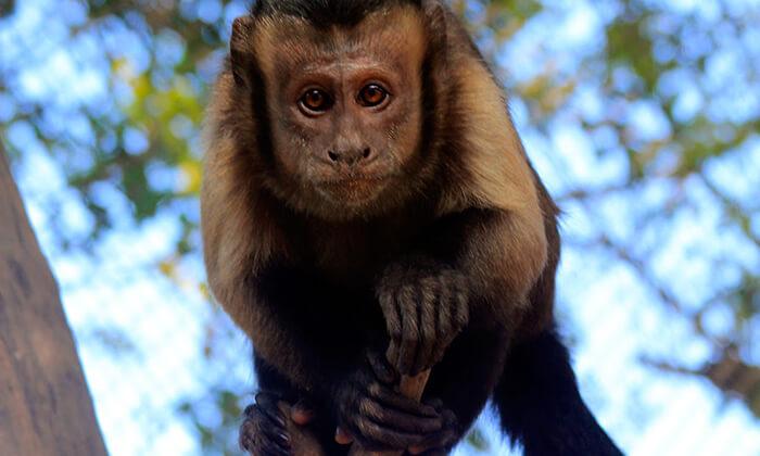גן וחיות דגניה, בקיבוץ דגניה