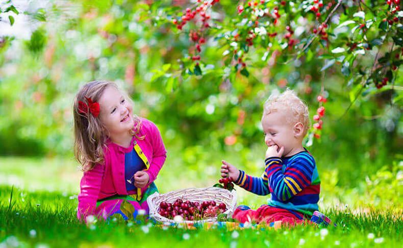 קטיף ואכילת דובדבנים בגולן