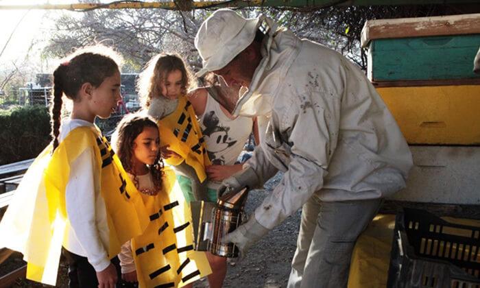 דבורת התבור – מרכז מבקרים כפרי