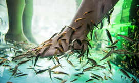 ספא דגים בכפות הרגליים