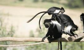 מקלט הקופים ביער בן שמן